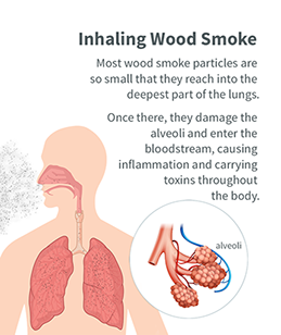 Graphic showing that inhaled wood smoke particles reach the deepest part of the lungs.